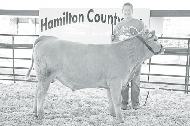 Korbin Stump walked away with a grand champion rosette, with the help of the calf partially taken care of by the Hampton ag program, in the 4-H Feeder Steer category at this year's Hamilton County Fair. News-Register/Cheyenne Rowe
