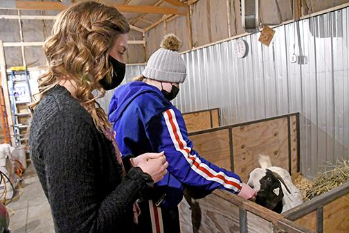 Brooke Bannister (left) and Aubree Quast check in on one of their nanny goats as the estimated delivery date grows closer.