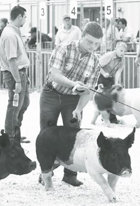 Brekyn Papineau was one of many local FFA members participating in animal shows this weekend. State Fair organizers scheduled all the 4-H animal shows the first weekend with FFA on center stage the final weekend. News-Register/Kurt Johnson